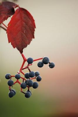 Rosso e blu naturale di marfy