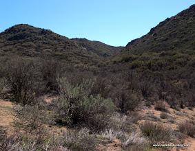 Photo: Sothern California inland chapparal, Laguna Mountains