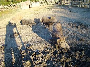 Photo: Az állatkert leírása: http://csicso-nagy.uw.hu/fo-o-Csicso-NAGY-A/ert2-145-allatkert.htm