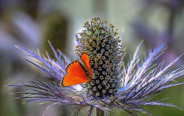 Fiore di montagna ...... con ospite  di Ocram