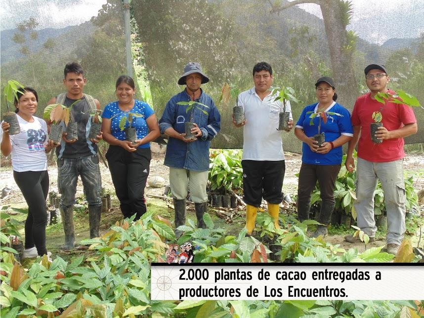 2.000 PLANTAS DE CACAO ENTREGADAS A  PRODUCTORES DE LOS ENCUENTROS.