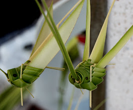 Photo: Year 2 Day 109 - Grasshoppers Made from Coconut Plant Leaves