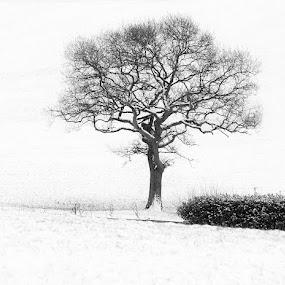 Lone Tree by Lee Sutton - Uncategorized All Uncategorized