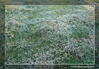 Photo: The amount of frost on the ground surprised me Sunday morning.