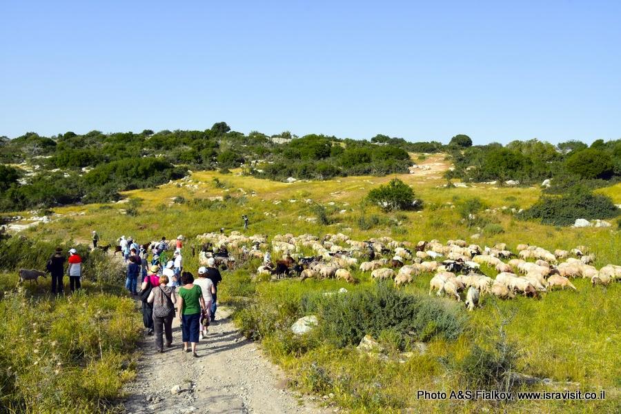 Экскурсия гида в Израиле Светланы Фиалковой. Пешеходный маршрут в парке Адулям.