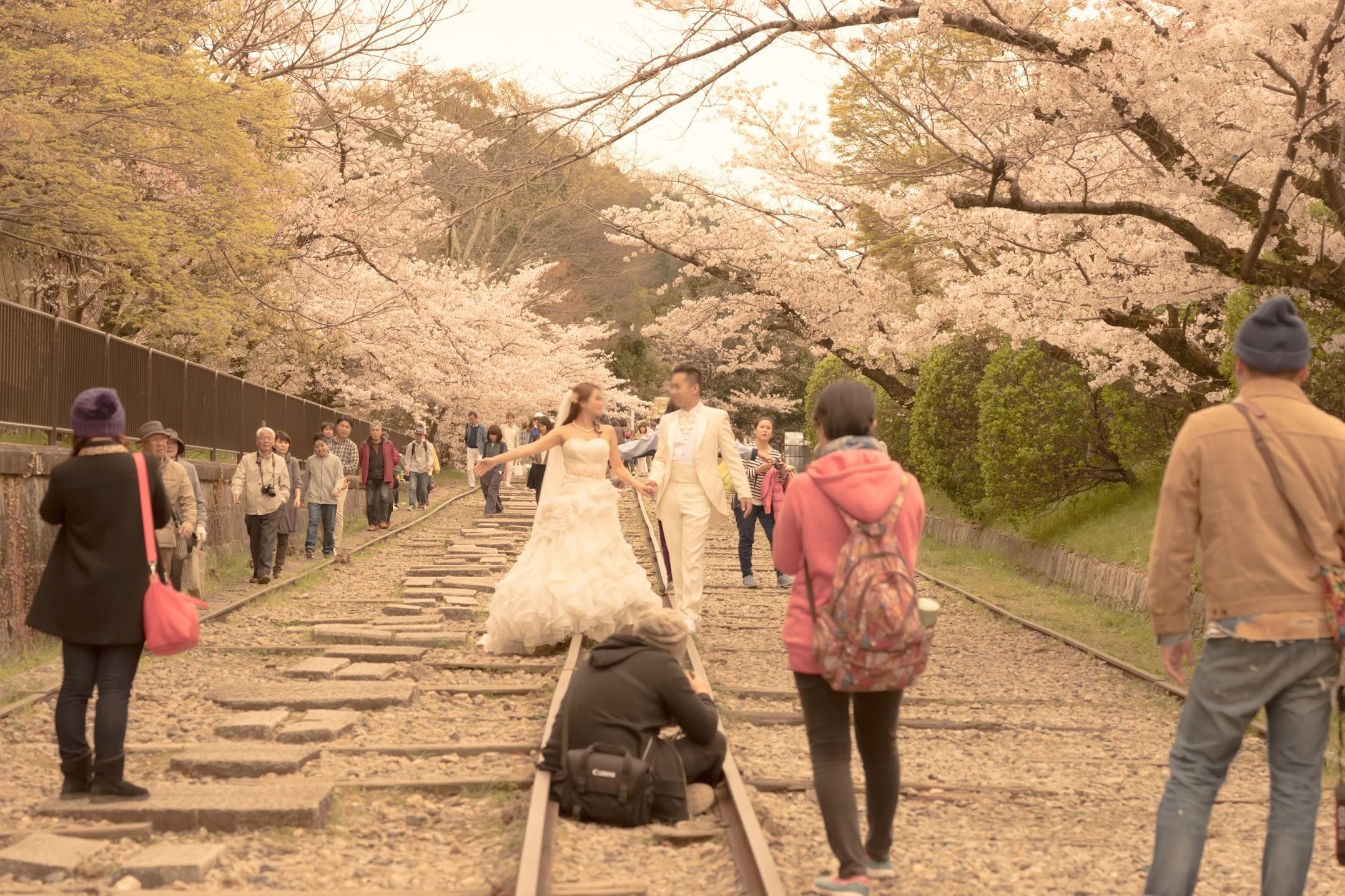 京都 桜 蹴上インクライン1