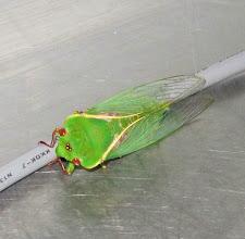Photo: Year 2 Day 164 - Locust in the Kitchen