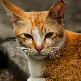 Lazy Day by Yohanes Arief Dewanto - Animals - Cats Kittens ( cat, animal, kittens, portrait, photography )