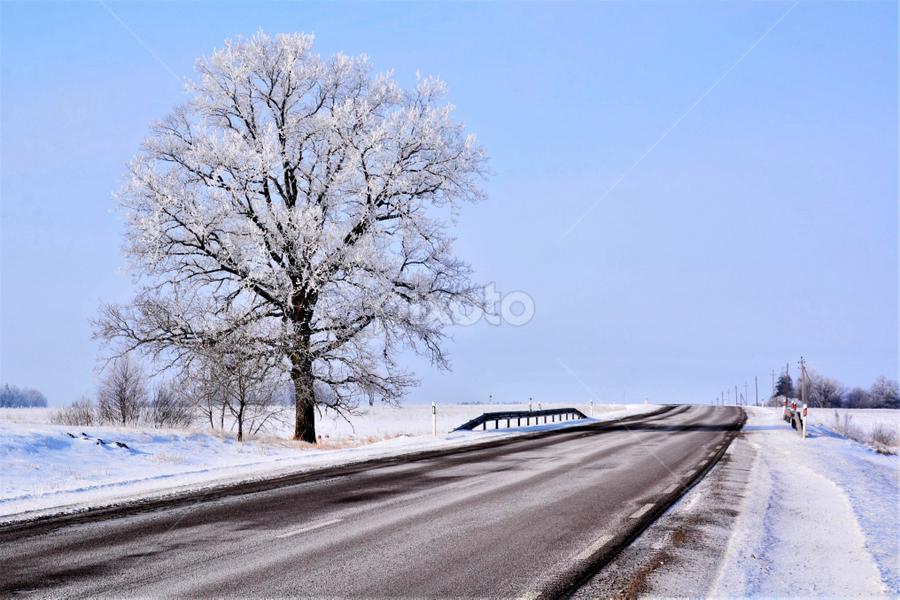 by Albina Jasinskaite - Nature Up Close Trees & Bushes