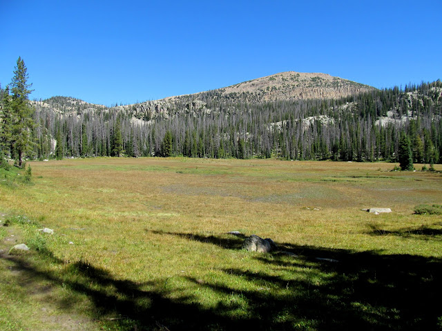 Meadow below Big Elk Lake