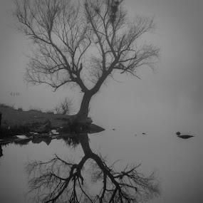by Robin Alin - Black & White Landscapes (  )