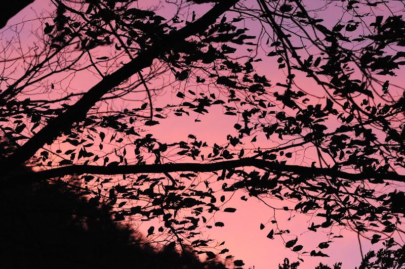 Pink around the lake. di Francesco Cardia