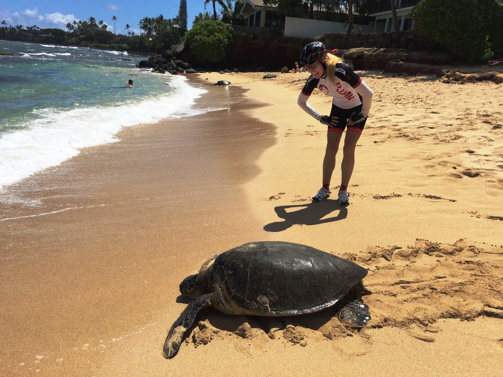 Start of Haleakala cycling climb from Paia at the beach with sea turtle.