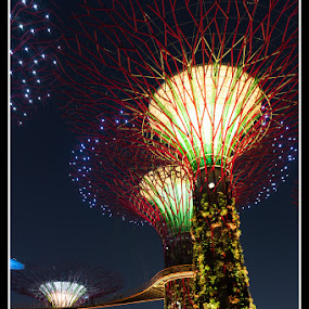 Garden By The Bay by Won Yee Ong - City,  Street & Park  City Parks