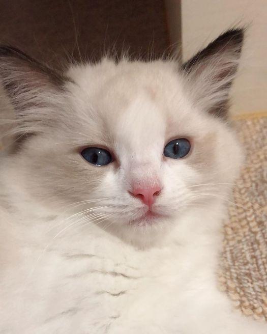 BLACKPINK-Lisa-Cat-Lily