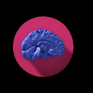 Interactive Neuro Anatomy 3D