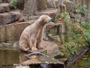 Photo: Knut ist zufrieden mit sich ;-)