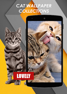 Cat Wallpaper Collections & Cat Breed Info - náhled
