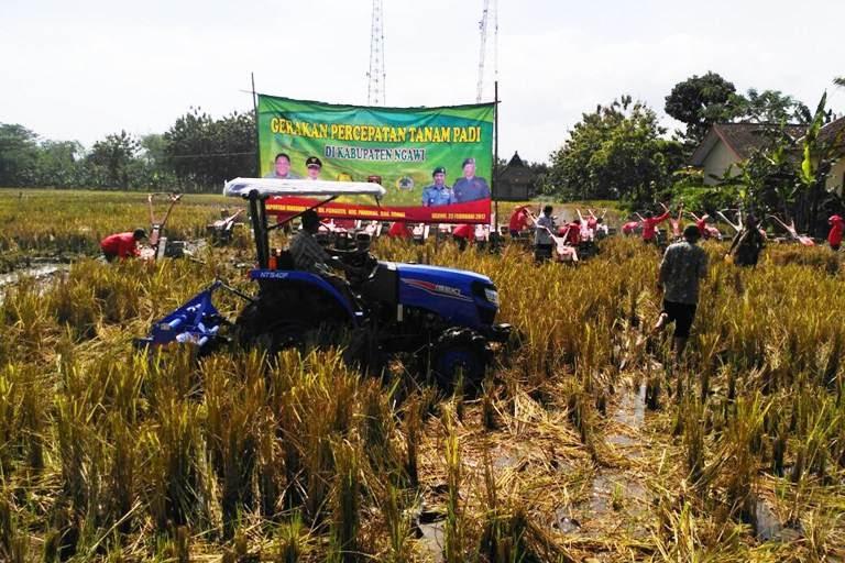 Percepatan tanam padi di desa Pangkur kecamatan pangkur