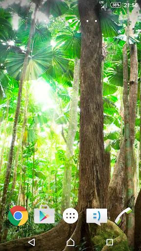 森林壁纸4K
