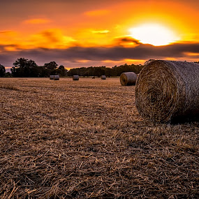 Country Sunset by Alex Bogdan - Landscapes Sunsets & Sunrises ( farm, field, clouds, orange, sky, sunset, australia, dusk, sun, country )