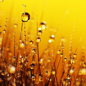 A Bug's View by Janet Herman - Abstract Macro ( abstract, macro, blades, grass, sunset, dew, dewdrops,  )