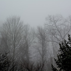 by Kaushik Mitra - Landscapes Weather