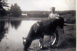 Photo: Branddammen i Vrå. Bernt vander tyr, Hofmand.