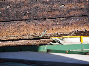 Photo: Large nail - City of Adelaide clipper ship