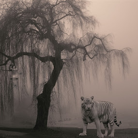 The Wild Forest by Stavros Troullinos - Illustration Sci Fi & Fantasy ( fantasy, wild, project, tiger, black and white, art, fine art, white, black, animal )