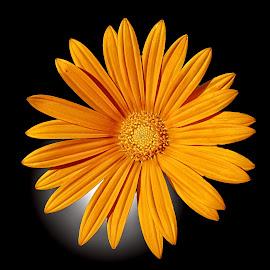 MGI flower 11 by Michael Moore - Flowers Single Flower (  )