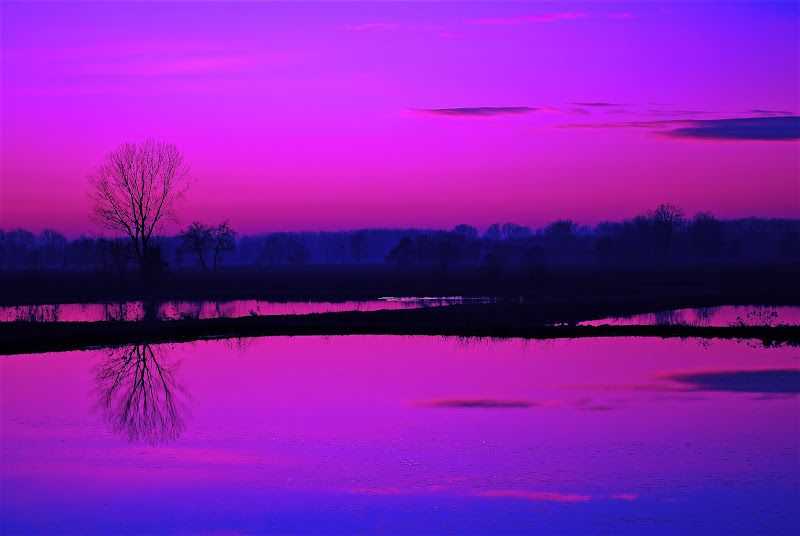 L'ora violetta di Daimon