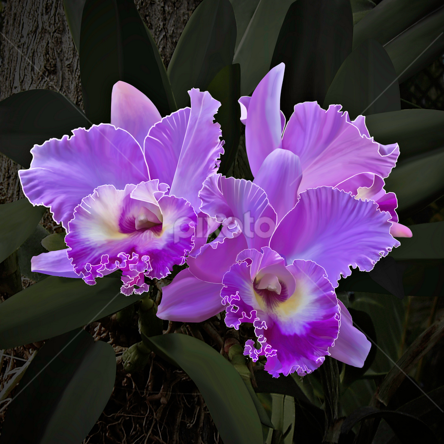 Magenta Orchid 105 by Joseph Vittek - Flowers Flowers in the Wild ( gold, magenta, pink, green, cattleya, yellow, orchid, spike,  )