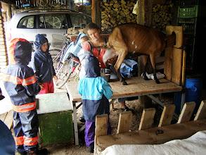 Photo: Zlatý hřeb výpravy - dojení kozy