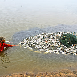 Netting the Fish by Mulawardi Sutanto - People Professional People ( tambak, fish, indramayu, travel, bandeng, panen )