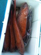 Photo: 釣果発表!このクーラーは、カワサキさんかな? 真鯛10匹とメダイ、アカイサキでした!