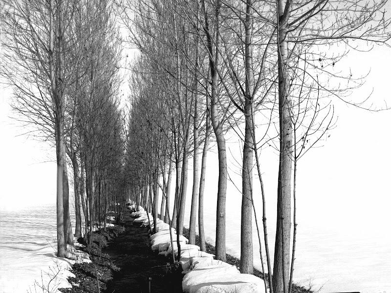 Bianchi filari di Naldina Fornasari