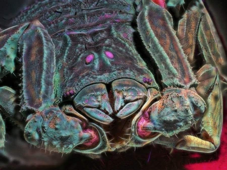 Что вы можете увидеть в ультрафиолетовом свете
