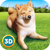 Play With Your Dog: Shiba Inu