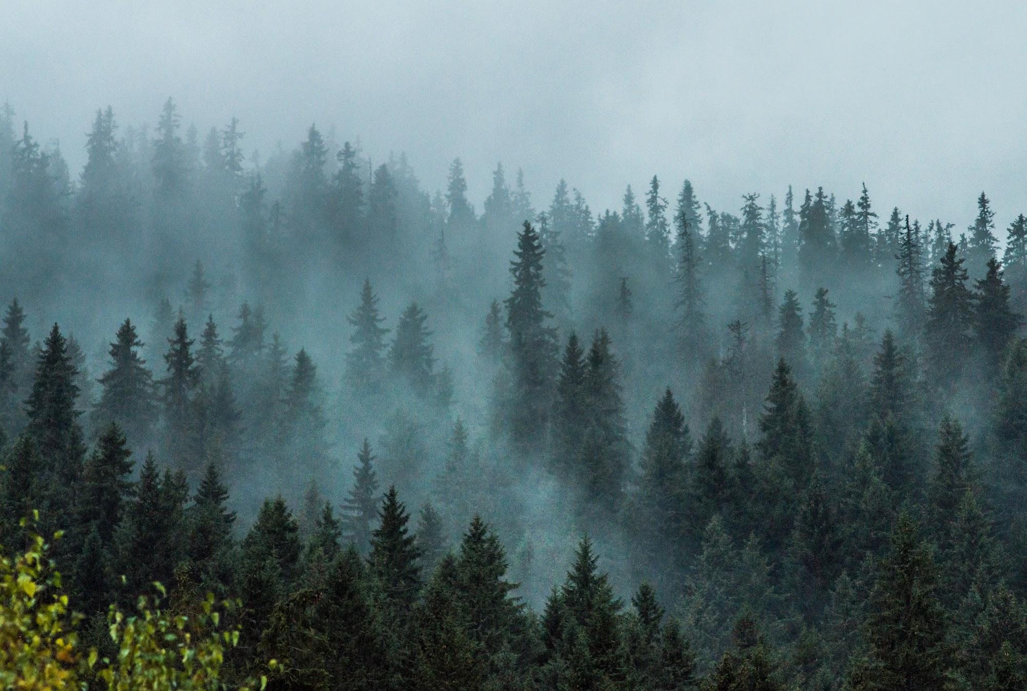 Туманні Ліси