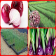 how to successfully grow onions
