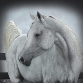 Grey Horse by Nicole Rix - Painting All Painting ( corel_painter, digital art, horse, grey, painting,  )