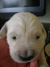 Photo: 7 april, pup blauw, de oogjes zijn open