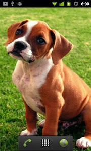 boxer puppy wallpapers screenshot 1