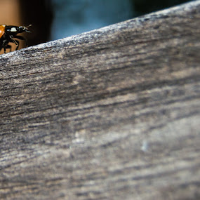The Biggest Little Climb by Andrew Brinkman - Uncategorized All Uncategorized ( red, nature, wood, color, insect, lady bug,  )