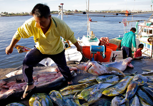 The Taiwanese shark fishery is not limited to longlining fleets fishing in international waters, local boats are also landing sharks in Taiwan. Pictured here is a fisher's catch of sharks along with mahi mahi.