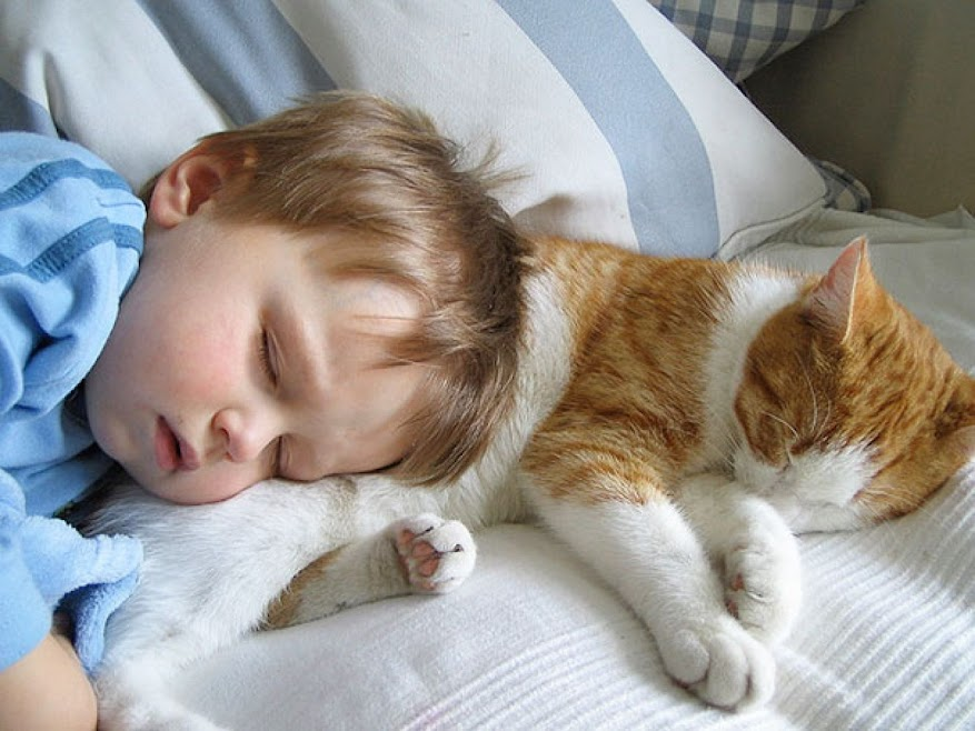 Cutest Photos Ever That Will Make You Get a Cat Friend for Your Baby