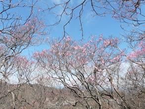 Photo: 昨年に比べて花芽はやや少ない