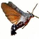 Macroglossa - Visual Search Plugin