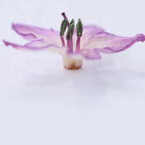 hot stuff by Cheryl Korff - Nature Up Close Flowers - 2011-2013 ( flower )